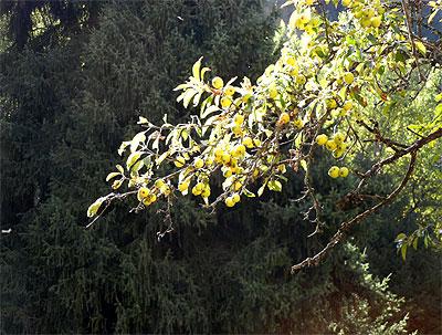 201209116_3